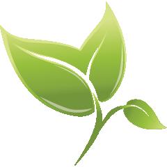 Green_leaf_02