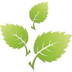 Green_leaf_03