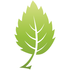 Green_leaf_09