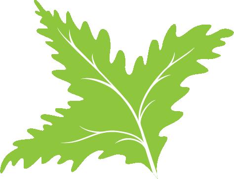 Leaf Icon 05