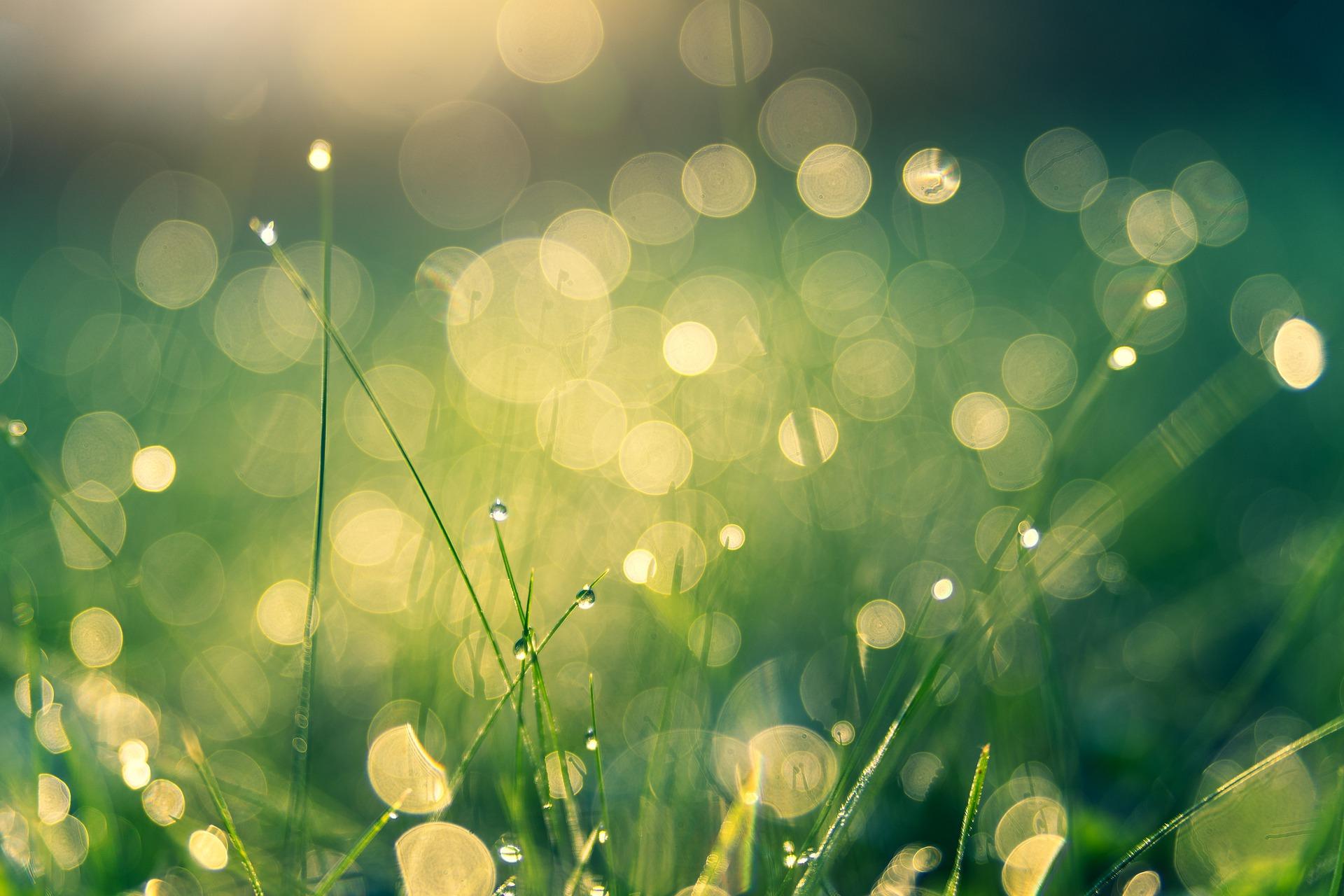 meadow-4485609_1920